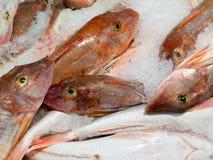 L'offerta dei pesci freschi ha raffreddato con ghiaccio schiacciato Fotografie Stock