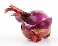 L'oignon rouge pose (l'allium) Image stock