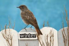 L'oiseau était perché sur une barrière décorée de l'hiver de mot Photographie stock libre de droits