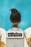 L'oiseau était perché sur une barrière décorée de l'hiver de mot Photo libre de droits