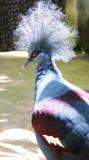 L'oiseau bleu du bonheur. photos libres de droits