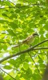 L'oiseau - borlaug Photographie stock libre de droits