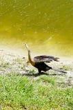 L'oiseau a chanté Photographie stock