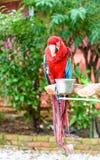 L'oiseau coloré d'ara sur la branche Images stock