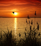 L'oiseau croisant le lac photographie stock libre de droits