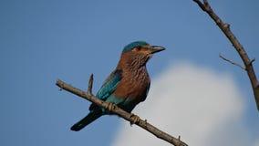 L'oiseau d'arc-en-ciel Photo stock