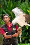 L'oiseau de l'exposition de proie Photos stock