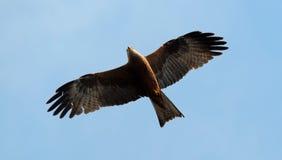 L'oiseau de prient Images libres de droits