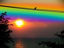 l'oiseau de silhouette de ciel d'arc-en-ciel de coucher du soleil part et arbre Image stock