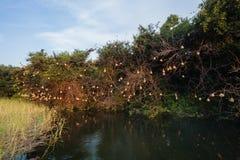 L'oiseau de tisserand emboîte l'eau   Image libre de droits