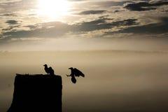 L'oiseau entre à la maison dans le coucher du soleil Photographie stock