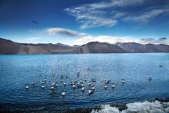 L'oiseau est actionné par sa propre vie et par sa motivation image libre de droits