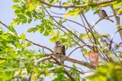 L'oiseau est sur un arbre naturel Images stock