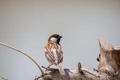 L'oiseau est sur un arbre naturel Photos libres de droits