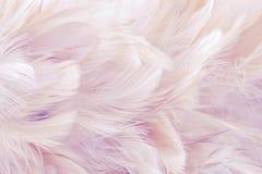 L'oiseau et les poulets abstraits roses de fond font varier le pas de la texture, du style de tache floue et de la couleur douce  images libres de droits