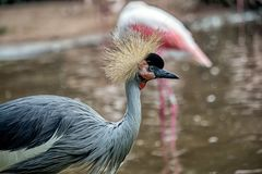 L'oiseau exotique des savannas de l'Afrique de l'Est images libres de droits
