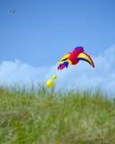 L'oiseau géant a formé le cerf-volant au-dessus des dunes des rivages d'océan Images libres de droits