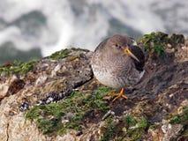 L'oiseau marin Photographie stock