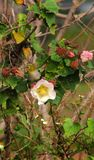 L'oiseau mignon se repose sur une fleur Photographie stock libre de droits