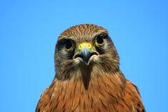 l'oiseau prient Image stock
