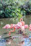 L'oiseau rose de flamant sur le lac en parc Image stock