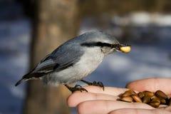 L'oiseau sauvage Photo libre de droits