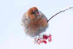 L'oiseau se repose sur une branche Photos stock