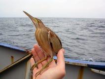L'oiseau se repose sur une main Images stock