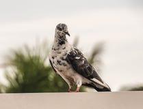 L'oiseau se tient image libre de droits