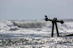L'oiseau se tient sur un naufrage comme vagues roulent dedans Images stock
