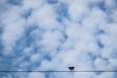 L'oiseau sont sur la ligne électrique sur le fond de ciel bleu photos libres de droits