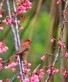 L'oiseau suce le nectar des fleurs photos libres de droits
