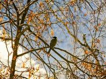 L'oiseau sur l'arbre image libre de droits