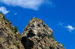 L'oiseau sur une montagne Photo libre de droits