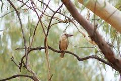 L'oiseau tôt de thr attrape le lézard Images libres de droits