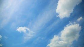 L'oiseau vole dans le ciel banque de vidéos