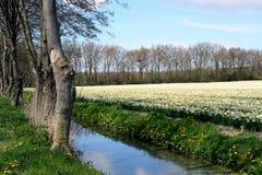 L'Olanda Fotografia Stock Libera da Diritti