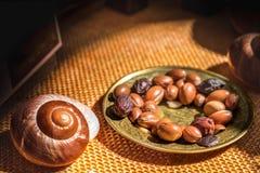 L'olio di argan è fatto dai dadi dell'argania spinosa - antiossidante utile della frutta dell'argania spinosa per le smagliature  fotografia stock libera da diritti