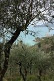 L'olive part sur le fond de la falaise photo stock