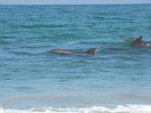 L'Oman, spiaggia del delfino Fotografia Stock