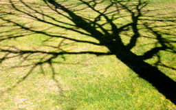 L'ombra Fotografie Stock