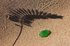 L'ombra della pianta sulla spiaggia giallo sabbia e sul vetro verde per Fotografia Stock Libera da Diritti