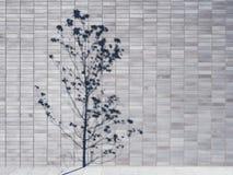 L'ombre d'arbre sur le mur couvre de tuiles le détail d'architecture de fond Photo stock
