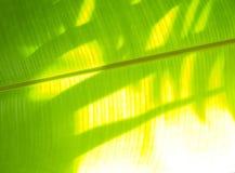 L'ombre dans la feuille verte Images stock