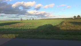 L'ombre de soirée de voiture sur des champs s'approchent de la route clips vidéos