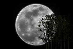 L'ombre en bambou de silhouette a éclipsé la lune Image stock