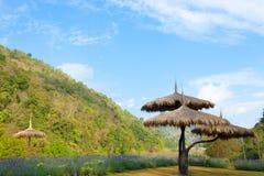 L'ombrello dell'erba Fotografia Stock