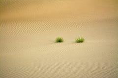 L'ondulation de sable crépite et les usines naturelles dans le désert Images libres de droits