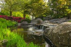 L'ONU Blomen de Planten photos stock