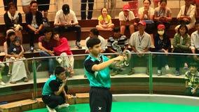 L'operatore del serpente con una cobra tossica mostra i suoi trucchi nell'azienda agricola del serpente di Maetaeng archivi video
